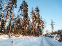 El cielo azul suave y los árboles de pino altos en la nieve festiva se visten encendido bajo luz del sol de la mañana Foto de archivo