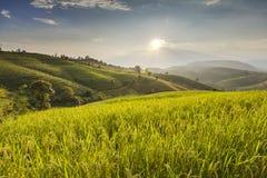 El cielo azul y el campo colgante verde del arroz en el PA bong el piang Chiangma Imagen de archivo