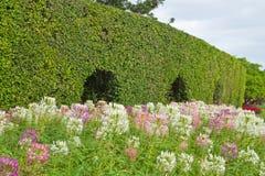 El cielo azul y el verde fresco en parque Fotografía de archivo libre de regalías