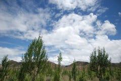 El cielo azul y los árboles Foto de archivo libre de regalías