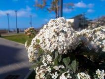 El cielo blanco de las macros del macroshot de la naturaleza macra de la flor se nubla las hojas bluesky fotografía de archivo