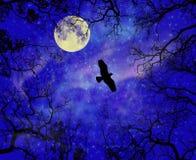 El cielo de la estrella de la noche con la luna y el pájaro Fotos de archivo libres de regalías