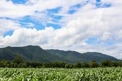 El cielo de la montaña del campo de maíz se nubla la naturaleza al aire libre Imagen de archivo