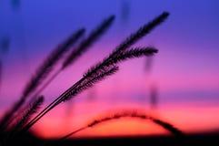 El cielo de la puesta del sol imagen de archivo