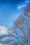 El cielo del abedul se nubla la primavera Imagen de archivo