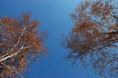 El cielo del otoño. Fotos de archivo libres de regalías