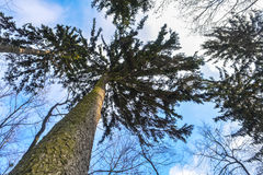 El cielo en el parque del invierno Fotos de archivo libres de regalías