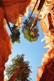 El cielo es azul en Bryce NP Foto de archivo