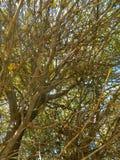 El cielo se puede ver a través de las ramas Imágenes de archivo libres de regalías