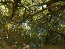 El cielo se puede ver a través de las ramas Fotos de archivo