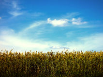 El cielo sobre el campo Imagenes de archivo