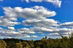 el cielo sobre los árboles en el bosque Fotografía de archivo libre de regalías