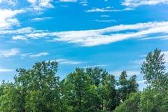 El cielo sobre los árboles verdes en el bosque Imagen de archivo