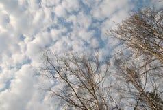 El cielo suave de la primavera con la nube, mira para arriba Foto de archivo