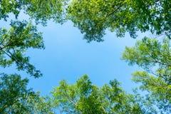 El cielo a trav?s del follaje, mira para arriba foto de archivo