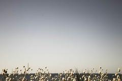 El cielo vacío del verano como espacio para el texto con una banda de conejitos florecientes ata el borde de las hierbas en la pa foto de archivo libre de regalías