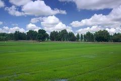 El cielo verde de establecimiento azul de la estación del campo del arroz se nubla Imágenes de archivo libres de regalías