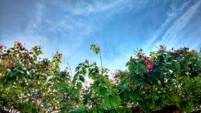 El cielo y las flores Imágenes de archivo libres de regalías