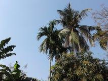 El cielo y los árboles Imagenes de archivo