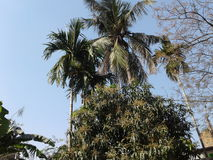 El cielo y los árboles Imágenes de archivo libres de regalías