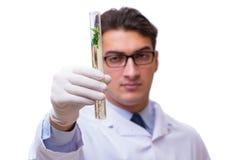 El científico con el almácigo verde en el vidrio aislado en blanco Imagen de archivo libre de regalías