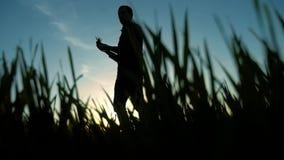 El científico de la silueta del granjero del hombre en campo con la hierba explora la agricultura que corre en la luz del sol de  almacen de video