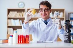 El científico del doctor que recibe el premio para su descubrimiento de la investigación foto de archivo libre de regalías