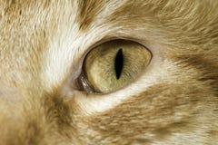 El cierre anaranjado del gato para arriba observa Foto de archivo libre de regalías