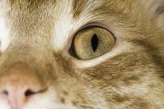 El cierre anaranjado del gato para arriba observa Fotos de archivo libres de regalías