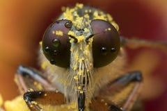 El cierre de la mosca de ladrón para arriba en Tailandia Imagen de archivo