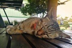 El cierre del gato de Tricolored para arriba duerme en la tabla de madera Fotos de archivo