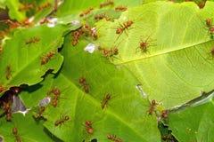 El cierre encima de hormigas jerarquizará en el parque en luz natural Foto de archivo