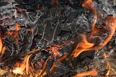 El cierre encima de la llama es ardiente seca las hojas Fotografía de archivo libre de regalías