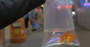 El cierre encima de la vista del brazo de la mujer celebra el paquete plástico con los pescados del oro y entrar en la alameda de almacen de video
