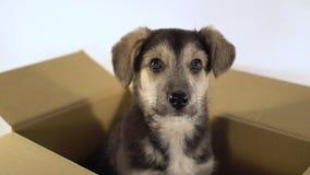 El cierre encima del perro de perrito lindo se sienta en una caja del franqueo metrajes