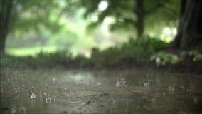 El cierre impresionante encima de la cámara lenta constante satisfactoria tiró de las gotas de lluvia del aguacero que bajaban en metrajes