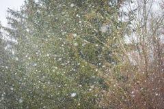 El cierre para arriba de la nieve que cae forma escamas en fondo del bosque Imágenes de archivo libres de regalías