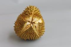 El cierre para arriba de un Durian Imagen de archivo libre de regalías