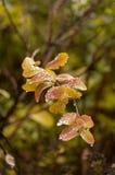 El cierre para arriba del árbol se va en colores del otoño Imagen de archivo