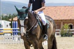 El cierre para arriba del caballo durante la competencia hace juego montar alrededor de ob Fotografía de archivo libre de regalías
