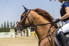 El cierre para arriba del caballo durante la competencia hace juego montar alrededor de ob Fotos de archivo