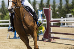 El cierre para arriba del caballo durante la competencia hace juego montar alrededor de ob Foto de archivo libre de regalías