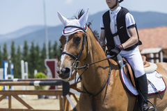 El cierre para arriba del caballo durante la competencia hace juego montar alrededor de ob Imágenes de archivo libres de regalías
