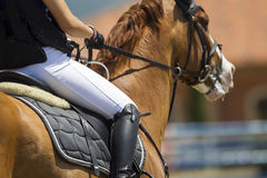 El cierre para arriba del jinete en un caballo durante la competencia hace juego ridi Foto de archivo libre de regalías