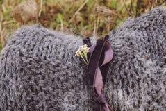 El cierre para arriba rodó encima de la manta hecha punto de lana hecha a mano gris con el fondo de la hierba secada Imagen de archivo