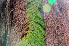El cierre secó las hojas de la palmera, fondo abstracto de la naturaleza Foto de archivo