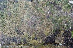 El cierre sucio de la imagen de la textura de la superficie del piso para arriba imágenes de archivo libres de regalías