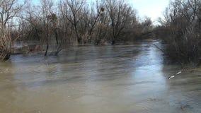 El ciervo de huevas lleva la corriente del río El río salió de las orillas almacen de video