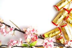 el ciruelo chino de las decoraciones del festival del Año Nuevo florece en blanco con Fotos de archivo