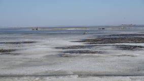 el cisne blanco camina en el hielo de la primavera del lago Naturaleza y fauna almacen de metraje de vídeo